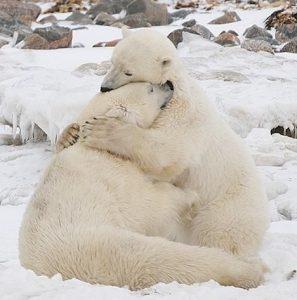 Read more about the article O abraço de urso