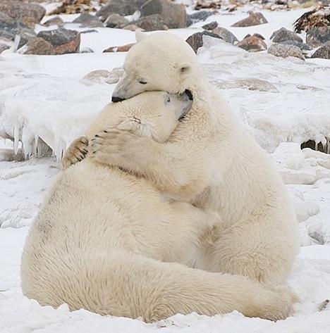 O abraço de urso